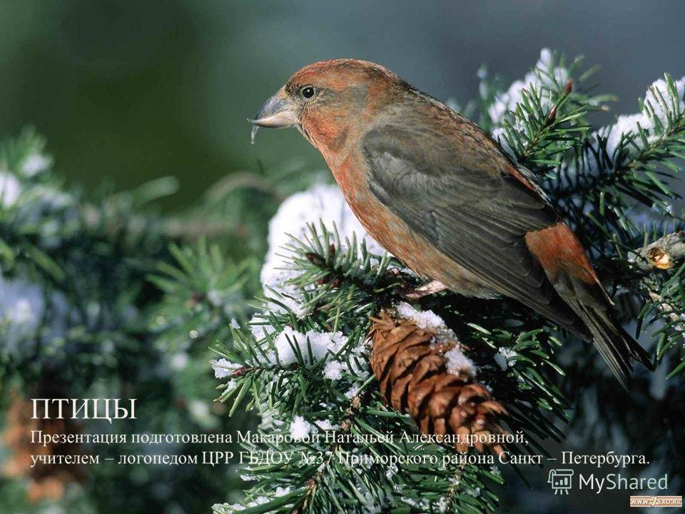 Картинки зимующих птиц белгородской области