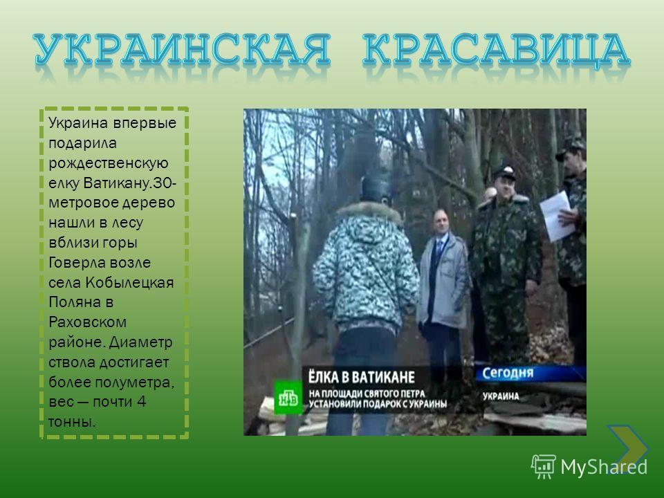 Украина впервые подарила рождественскую елку Ватикану.30- метровое дерево нашли в лесу вблизи горы Говерла возле села Кобылецкая Поляна в Раховском районе. Диаметр ствола достигает более полуметра, вес почти 4 тонны.