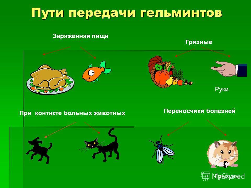Пути передачи гельминтов Грязные При контакте больных животных Зараженная пища Переносчики болезней Руки Грызуны