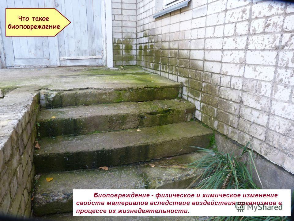 Биоповреждение - физическое и химическое изменение свойств материалов вследствие воздействия организмов в процессе их жизнедеятельности. Что такое биоповреждение