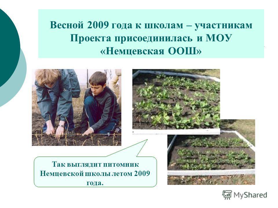 Весной 2009 года к школам – участникам Проекта присоединилась и МОУ «Немцевская ООШ» Так выглядит питомник Немцевской школы летом 2009 года.