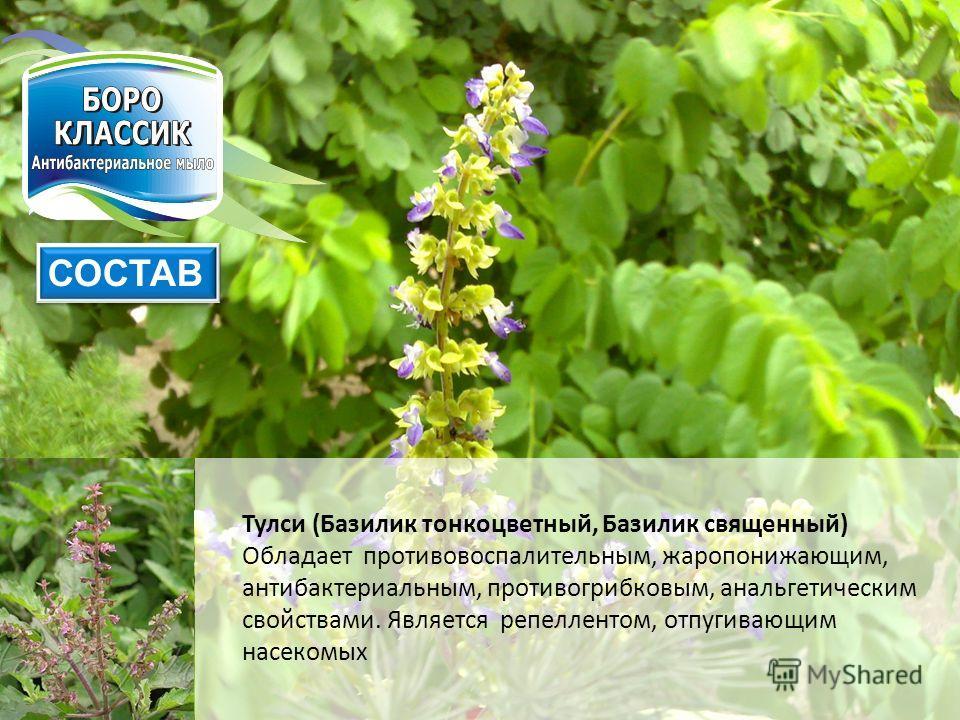 Тулси (Базилик тонкоцветный, Базилик священный) Обладает противовоспалительным, жаропонижающим, антибактериальным, противогрибковым, анальгетическим свойствами. Является репеллентом, отпугивающим насекомых СОСТАВ