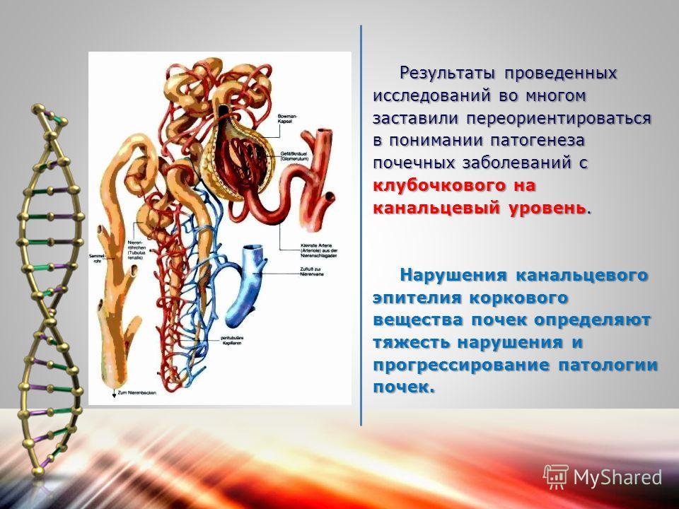 Результаты проведенных исследований во многом заставили переориентироваться в понимании патогенеза почечных заболеваний с клубочкового на канальцевый уровень. Нарушения канальцевого эпителия коркового вещества почек определяют тяжесть нарушения и про
