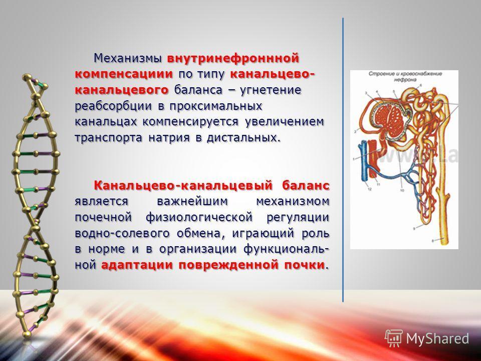Механизмы внутринефроннной компенсациии по типу канальцево- канальцевого баланса – угнетение реабсорбции в проксимальных канальцах компенсируется увеличением транспорта натрия в дистальных. Канальцево-канальцевый баланс является важнейшим механизмом