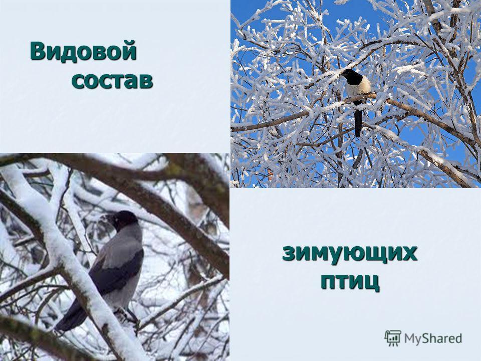 Видовой состав зимующих птиц