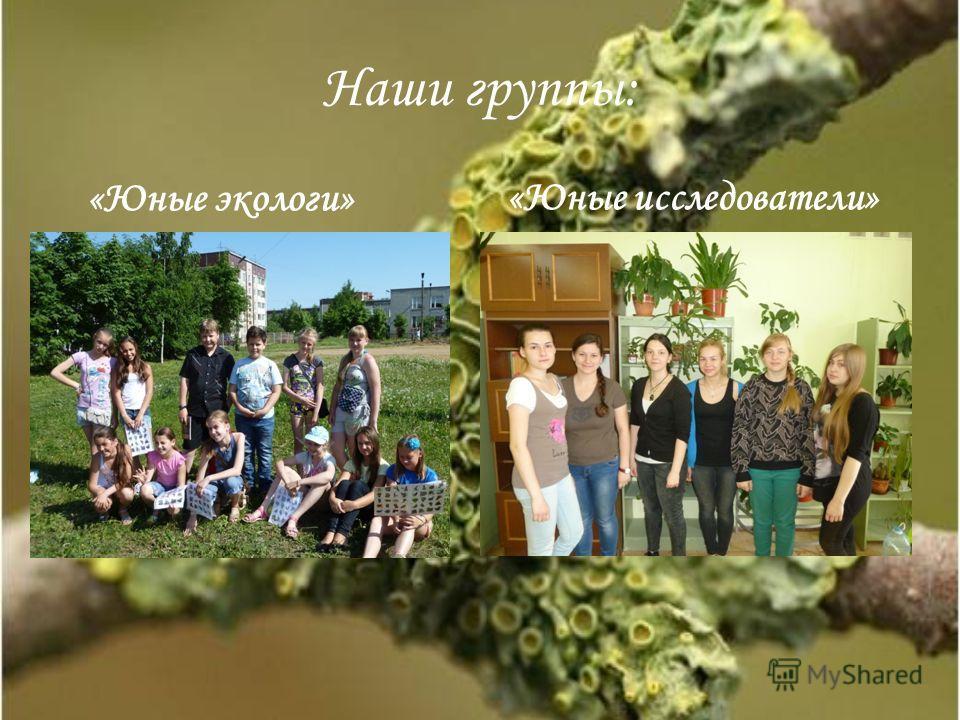 Наши группы: «Юные экологи» «Юные исследователи»