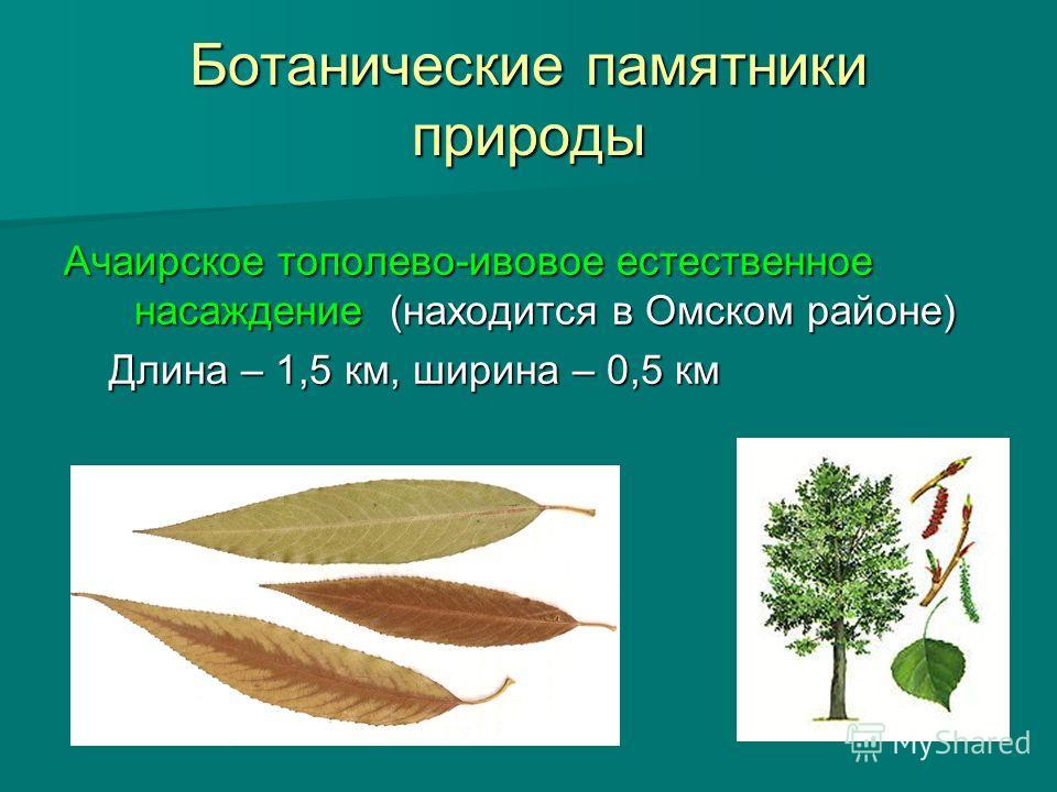 Ботанические памятники природы Ачаирское тополево-ивовое естественное насаждение (находится в Омском районе) Длина – 1,5 км, ширина – 0,5 км Длина – 1,5 км, ширина – 0,5 км