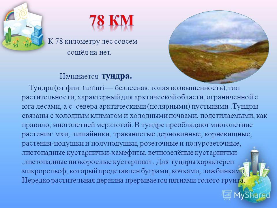 К 78 километру лес совсем сошёл на нет. Начинается тундра. Тундра (от фин. tunturi безлесная, голая возвышенность), тип растительности, характерный для арктической области, ограниченной с юга лесами, а с севера арктическими (полярными) пустынями.Тунд