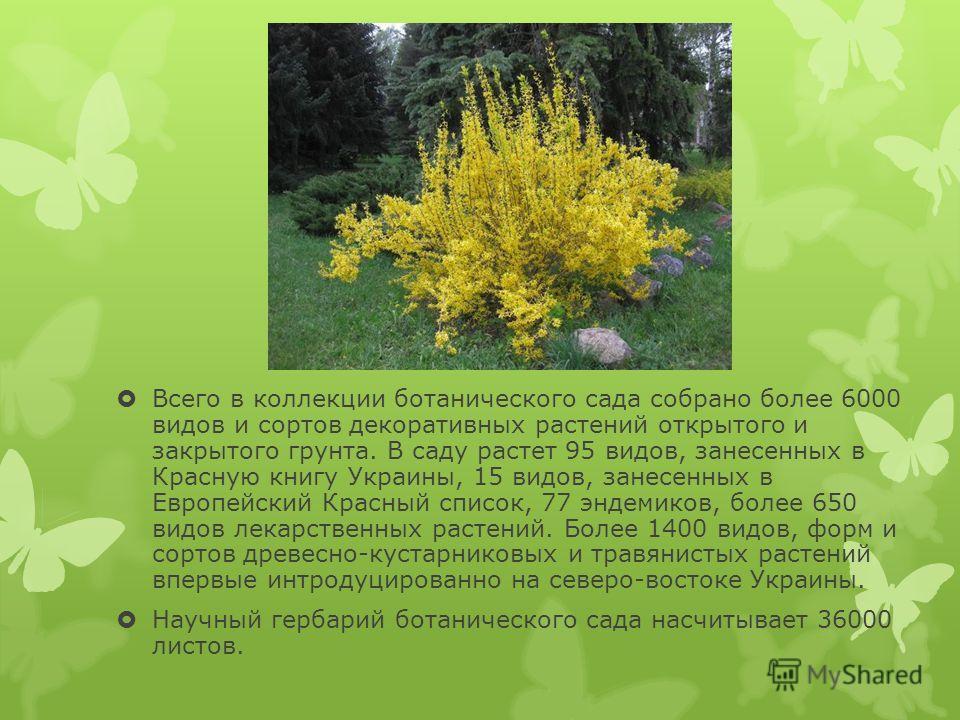 Всего в коллекции ботанического сада собрано более 6000 видов и сортов декоративных растений открытого и закрытого грунта. В саду растет 95 видов, занесенных в Красную книгу Украины, 15 видов, занесенных в Европейский Красный список, 77 эндемиков, бо