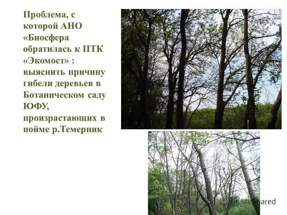 Проблема, с которой АНО «Биосфера обратилась к ПТК «Экомост» : выяснить причину гибели деревьев в Ботаническом саду ЮФУ, произрастающих в пойме р.Темерник