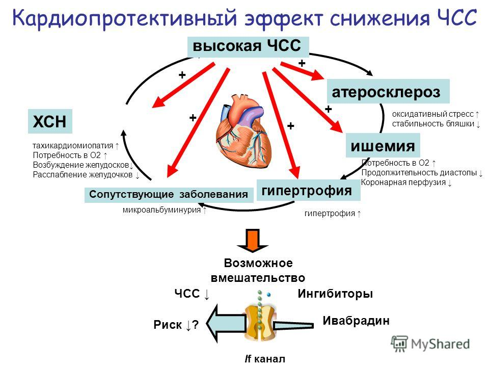 ишемия + + + + + микроальбуминурия оксидативный стресс стабильность бляшки Потребность в О2 Продолжительность диастолы Коронарная перфузия тахикардиомиопатия Потребность в О2 Возбуждение желудосков Расслабление желудочков гипертрофия высокая ЧСС атер