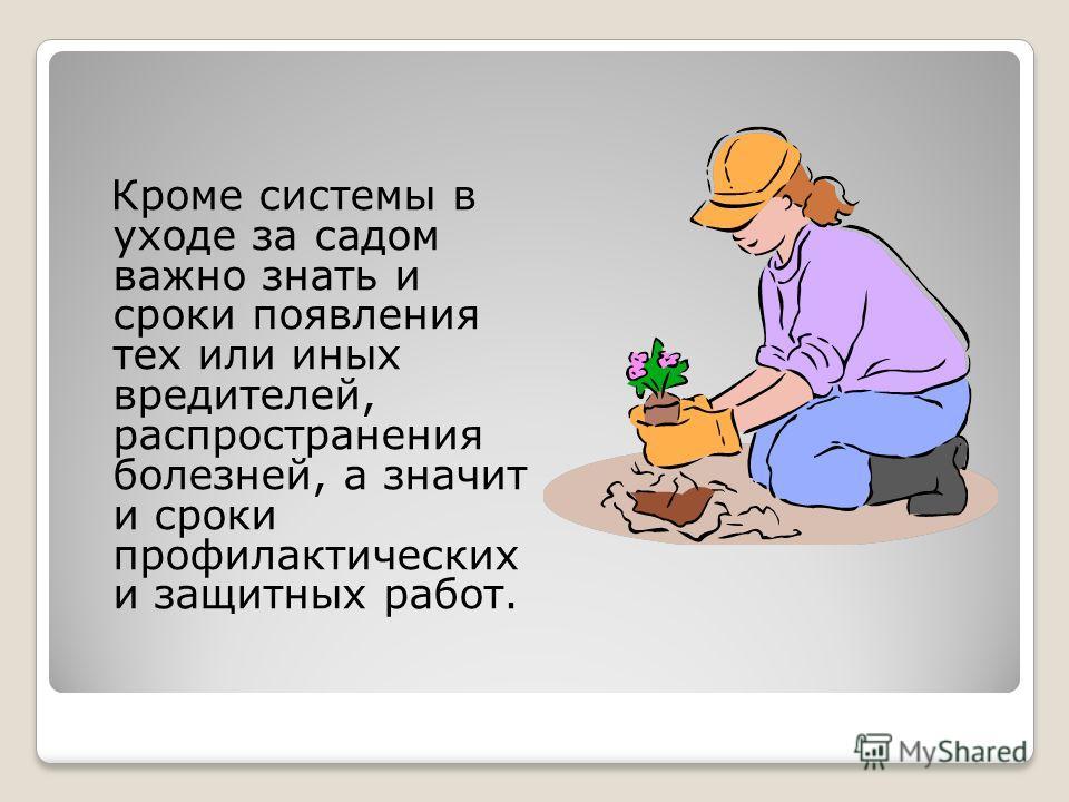 Кроме системы в уходе за садом важно знать и сроки появления тех или иных вредителей, распространения болезней, а значит и сроки профилактических и защитных работ.