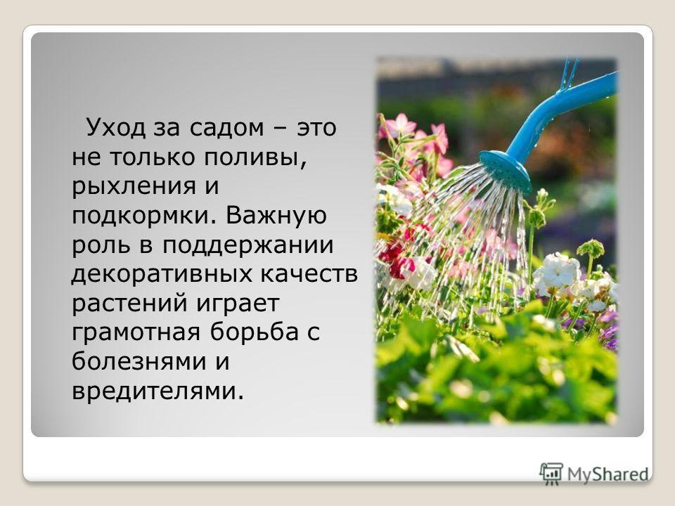 Уход за садом – это не только поливы, рыхления и подкормки. Важную роль в поддержании декоративных качеств растений играет грамотная борьба с болезнями и вредителями.