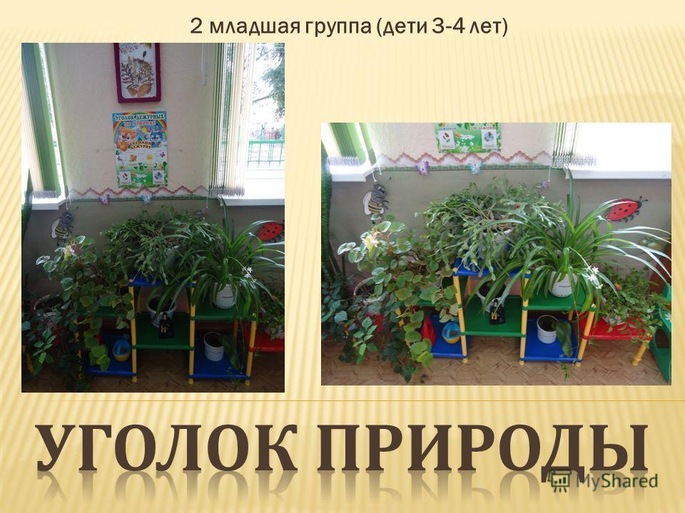2 младшая группа (дети 3-4 лет)