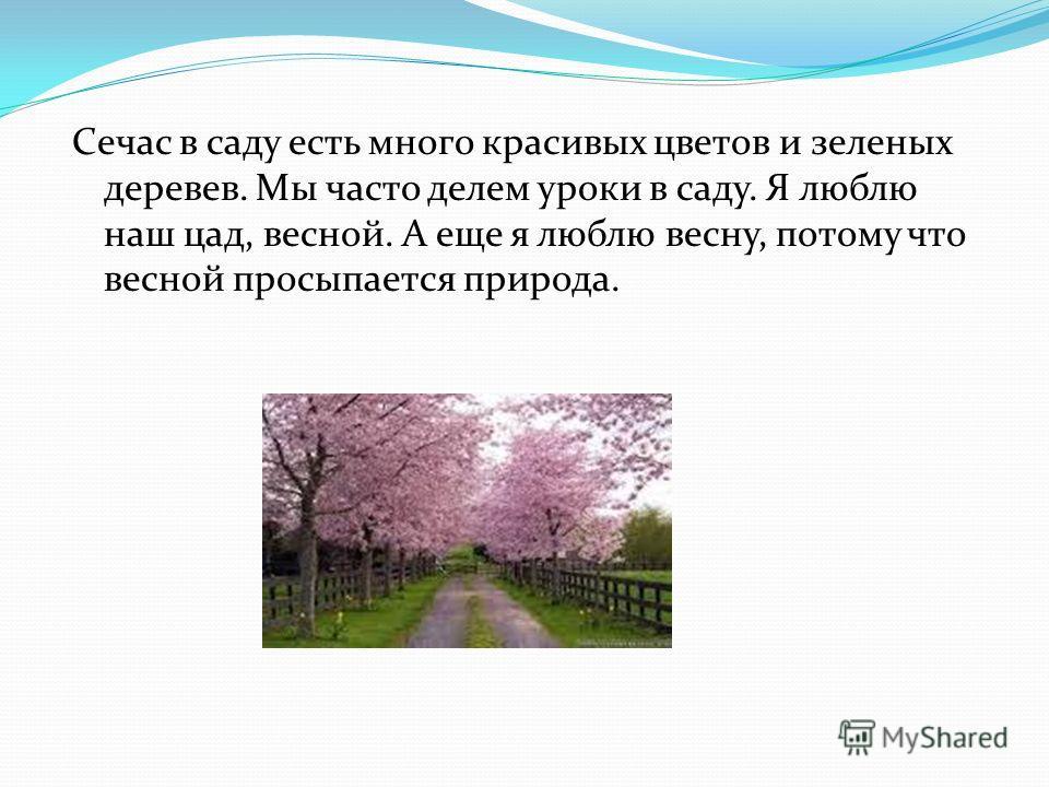 Сечас в саду есть много красивых цветов и зеленых деревев. Мы часто делем уроки в саду. Я люблю наш цад, весной. А еще я люблю весну, потому что весной просыпается природа.