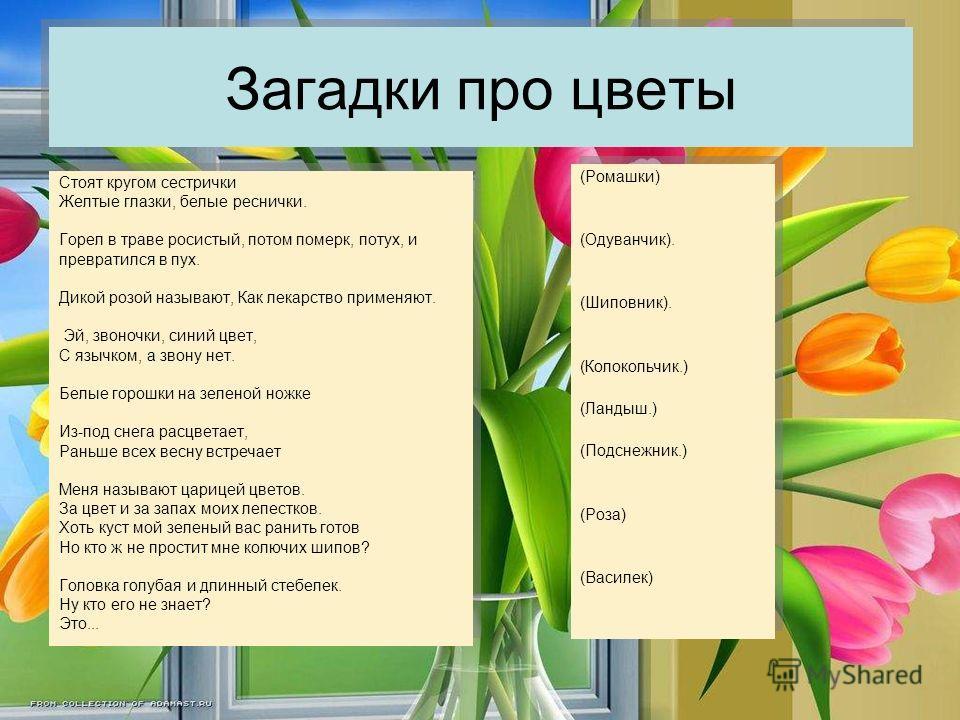 Презентация Про Цветок Колокольчик
