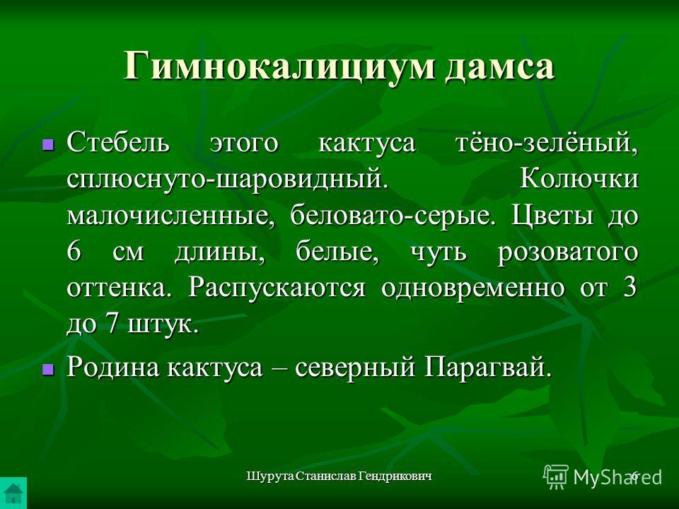 Шурута Станислав Гендрикович6 Гимнокалициум дамса Стебель этого кактуса тёно-зелёный, сплюснуто-шаровидный. Колючки малочисленные, беловато-серые. Цветы до 6 см длины, белые, чуть розоватого оттенка. Распускаются одновременно от 3 до 7 штук. Стебель