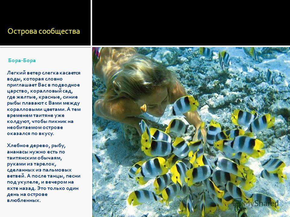 Острова сообщества Бора-Бора Легкий ветер слегка касается воды, которая словно приглашает Вас в подводное царство, коралловый сад, где желтые, красные, синие рыбы плавают с Вами между коралловыми цветами. А тем временем таитяне уже колдуют, чтобы пик