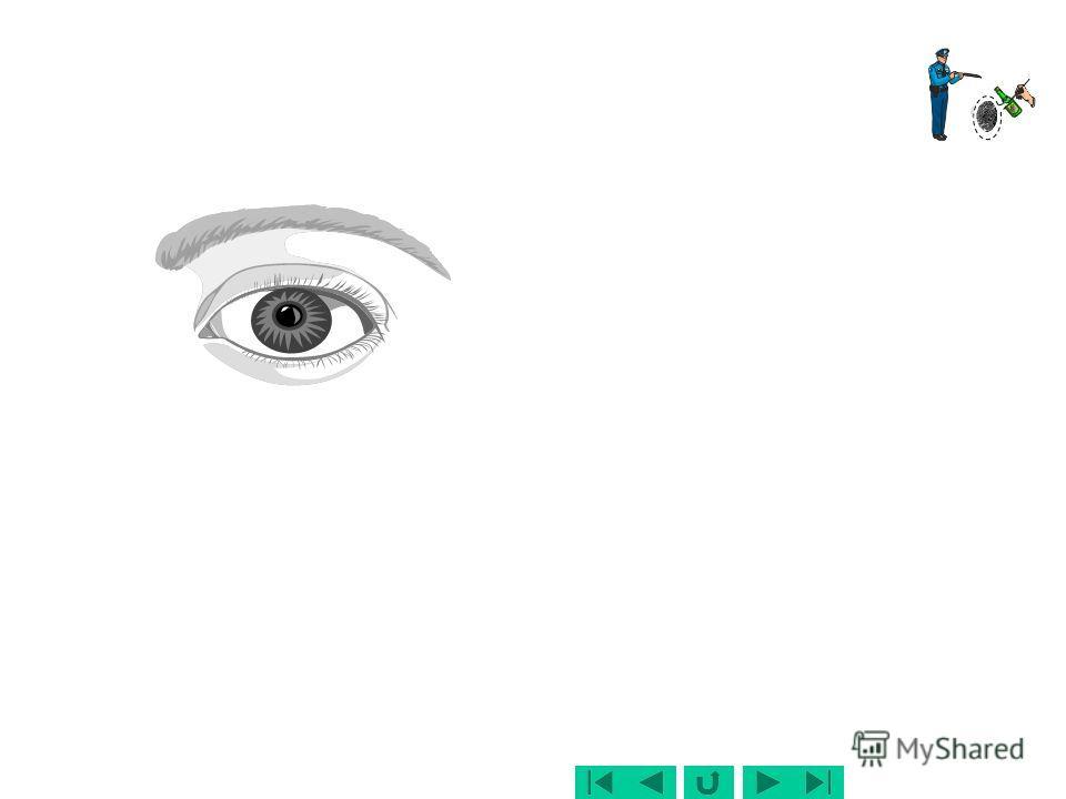 Детальный (осмотр в динамике) – следователь (дознаватель, эксперт и т.д.) непосредственно работает с объектами (деталями) поочередно осматривает и изучает узлы ситуации и детали обстановки выявляет и фиксирует следы и другие объекты, при этом уже мож