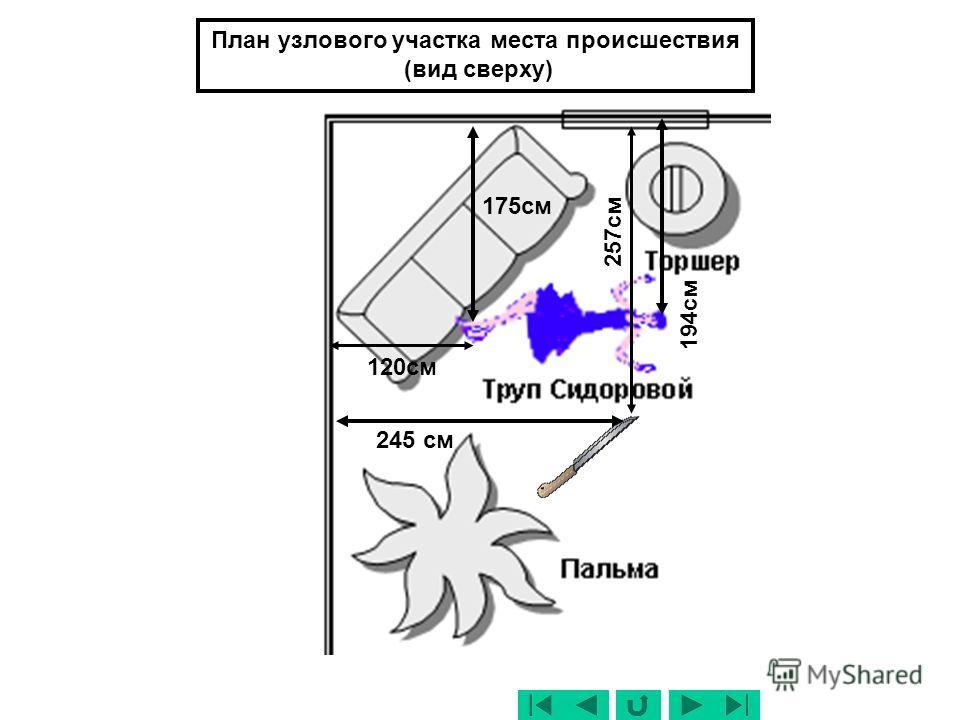 Шкаф для бумаг Торшер Пальма Труп Сидоровой Слайд 14 План места непосредственно происшествия (обзорный) (вид сверху)