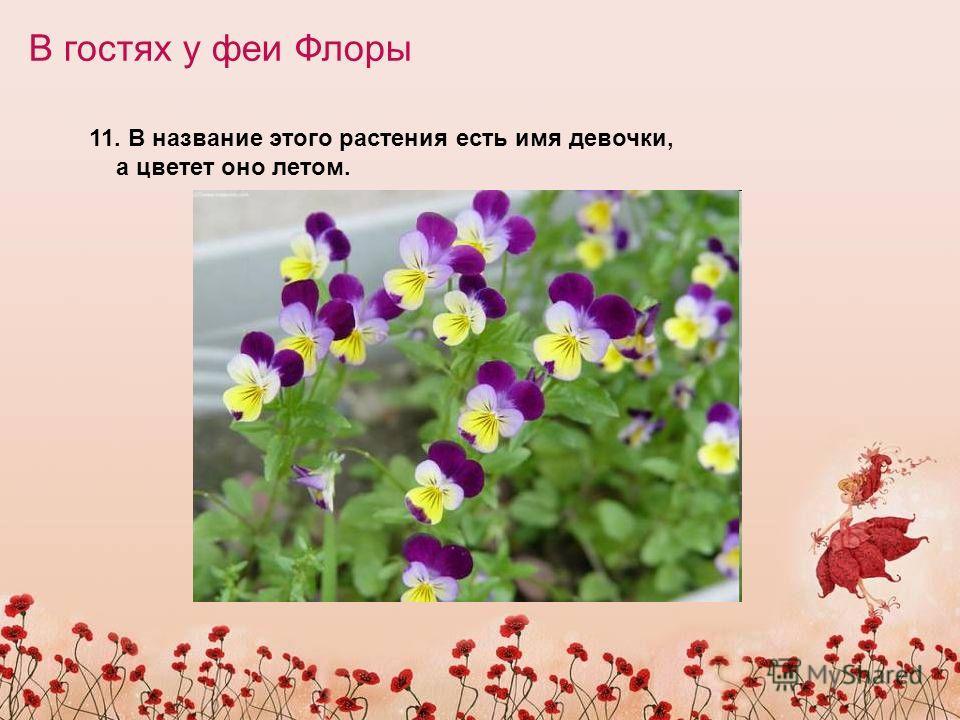 В гостях у феи Флоры 11. В название этого растения есть имя девочки, а цветет оно летом.