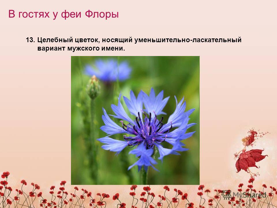 В гостях у феи Флоры 13. Целебный цветок, носящий уменьшительно-ласкательный вариант мужского имени.