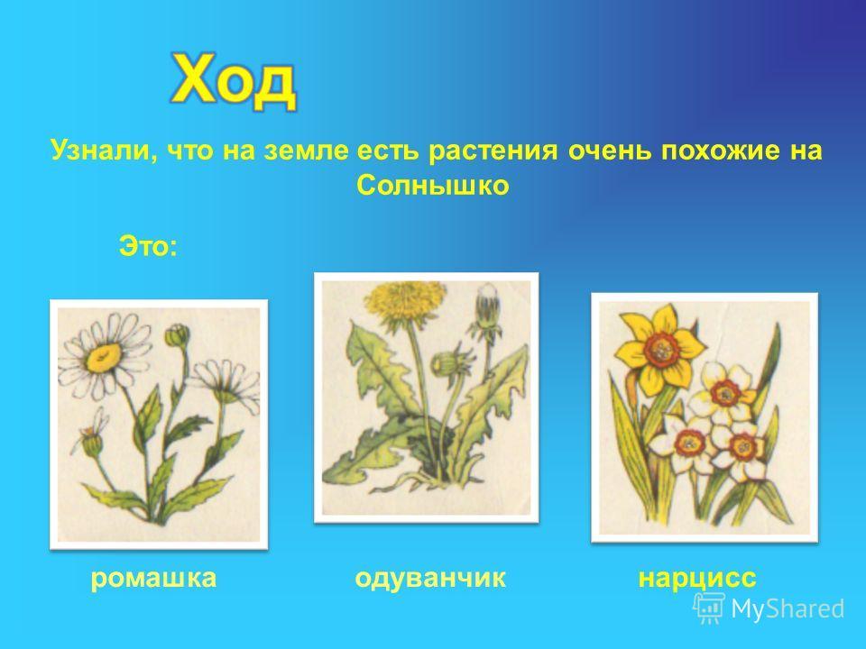 Узнали, что на земле есть растения очень похожие на Солнышко Это: ромашкаодуванчикнарцисс