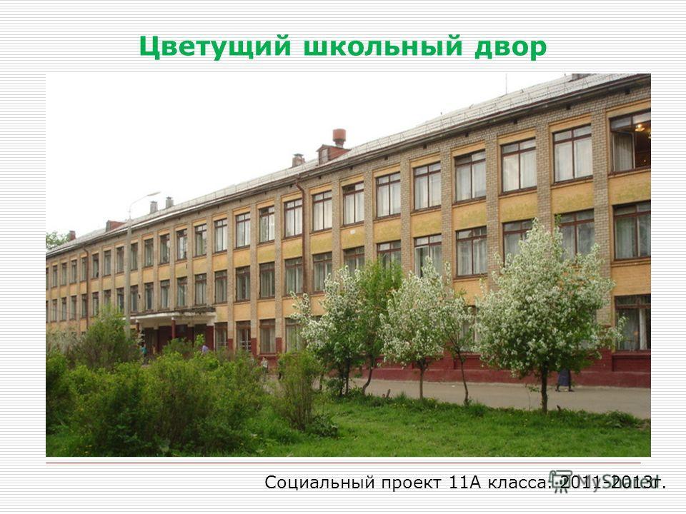 Цветущий школьный двор Социальный проект 11А класса. 2011-2013г.