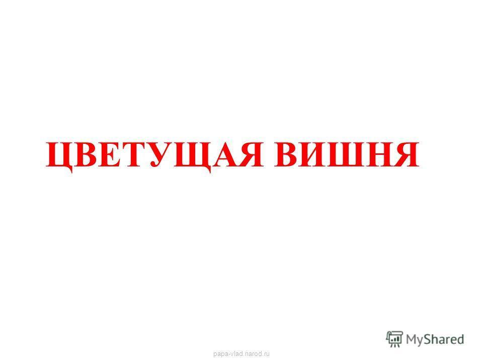 ЦВЕТУЩАЯ ВИШНЯ Цветущая вишня papa-vlad.narod.ru
