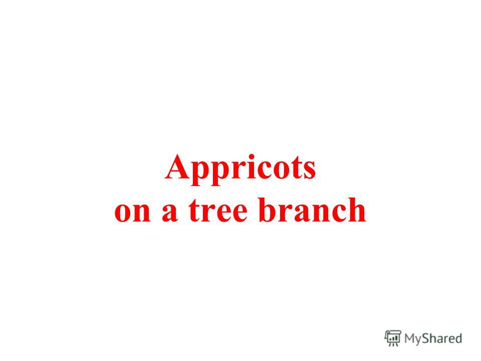 Appricots on a tree branch