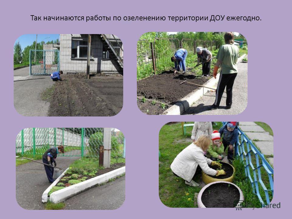 Так начинаются работы по озеленению территории ДОУ ежегодно.