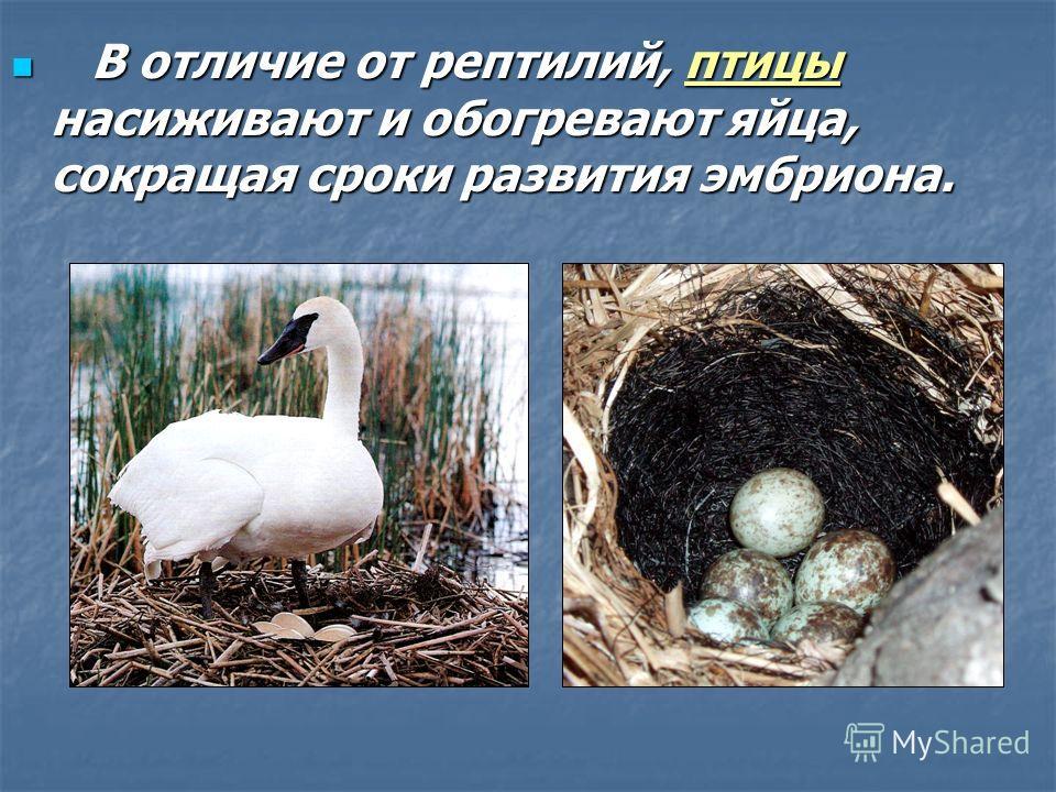 Развитие зародыша пресмыкающихся происходит на суше. От потери воды его защищает скорлупа яйца. Развитие зародыша пресмыкающихся происходит на суше. От потери воды его защищает скорлупа яйца. Вокруг зародыша образуются две оболочки: серозная и амниот