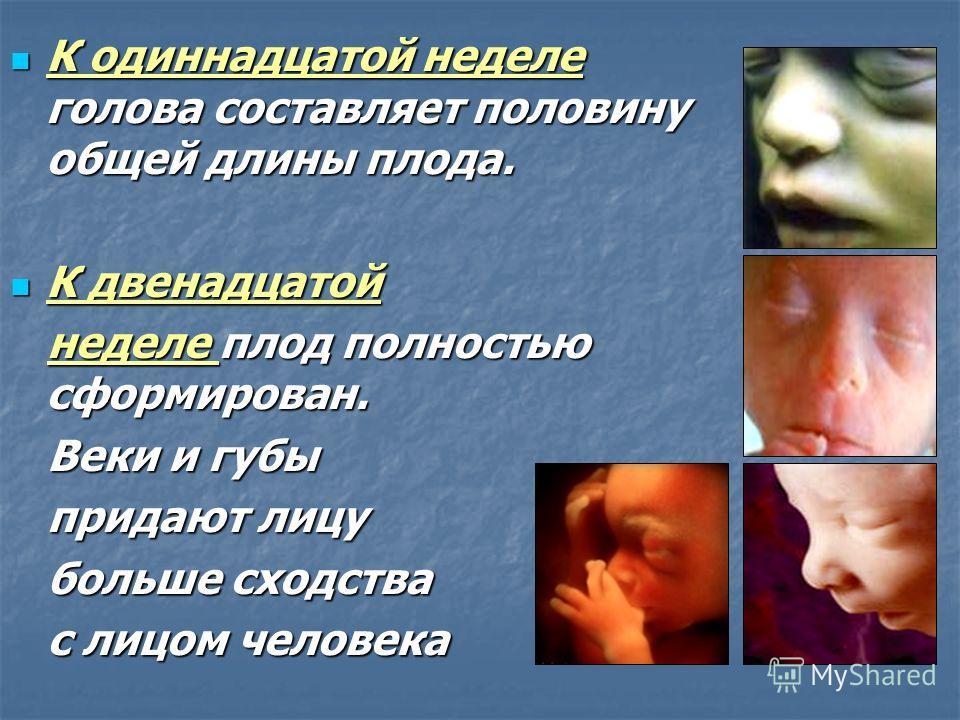 На четвертой неделе развития На четвертой неделе развития у зародыша формируется сердце, кровеносные сосуды и кишечник. у зародыша формируется сердце, кровеносные сосуды и кишечник. На шестой неделе начинается формирование конечностей, На шестой неде