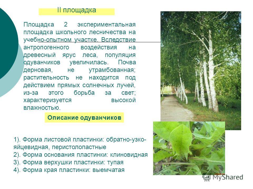 II площадка Площадка 2 экспериментальная площадка школьного лесничества на учебно-опытном участке. Вследствие антропогенного воздействия на древесный ярус леса, популяция одуванчиков увеличилась. Почва дерновая, не утрамбованная; растительность не на