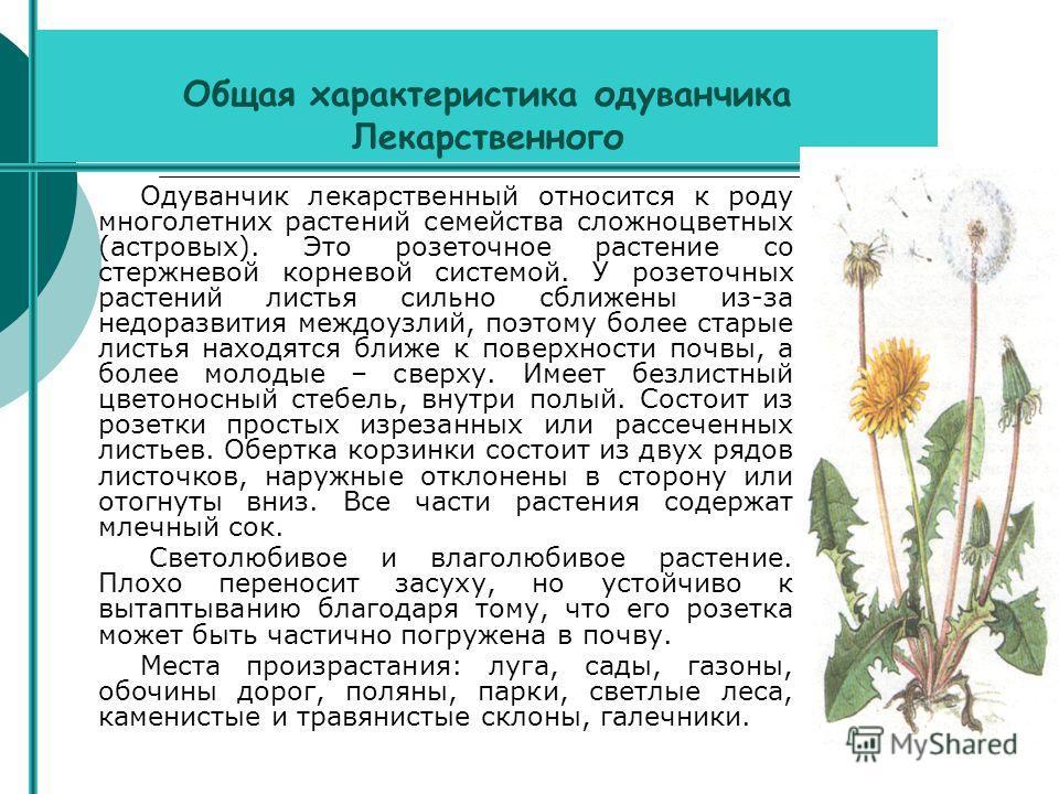 Общая характеристика одуванчика Лекарственного Одуванчик лекарственный относится к роду многолетних растений семейства сложноцветных (астровых). Это розеточное растение со стержневой корневой системой. У розеточных растений листья сильно сближены из-