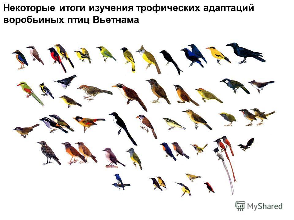 Некоторые итоги изучения трофических адаптаций воробьиных птиц Вьетнама