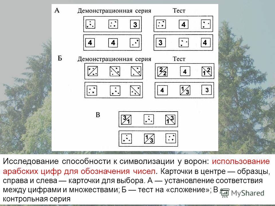 Исследование способности к символизации у ворон: использование арабских цифр для обозначения чисел. Карточки в центре образцы, справа и слева карточки для выбора. А установление соответствия между цифрами и множествами; Б тест на «сложение»; В контро