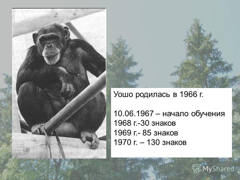 Уошо родилась в 1966 г. 10.06.1967 – начало обучения 1968 г.-30 знаков 1969 г.- 85 знаков 1970 г. – 130 знаков