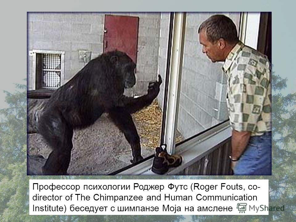 Профессор психологии Роджер Футс (Roger Fouts, co- director of The Chimpanzee and Human Communication Institute) беседует с шимпанзе Moja на амслене