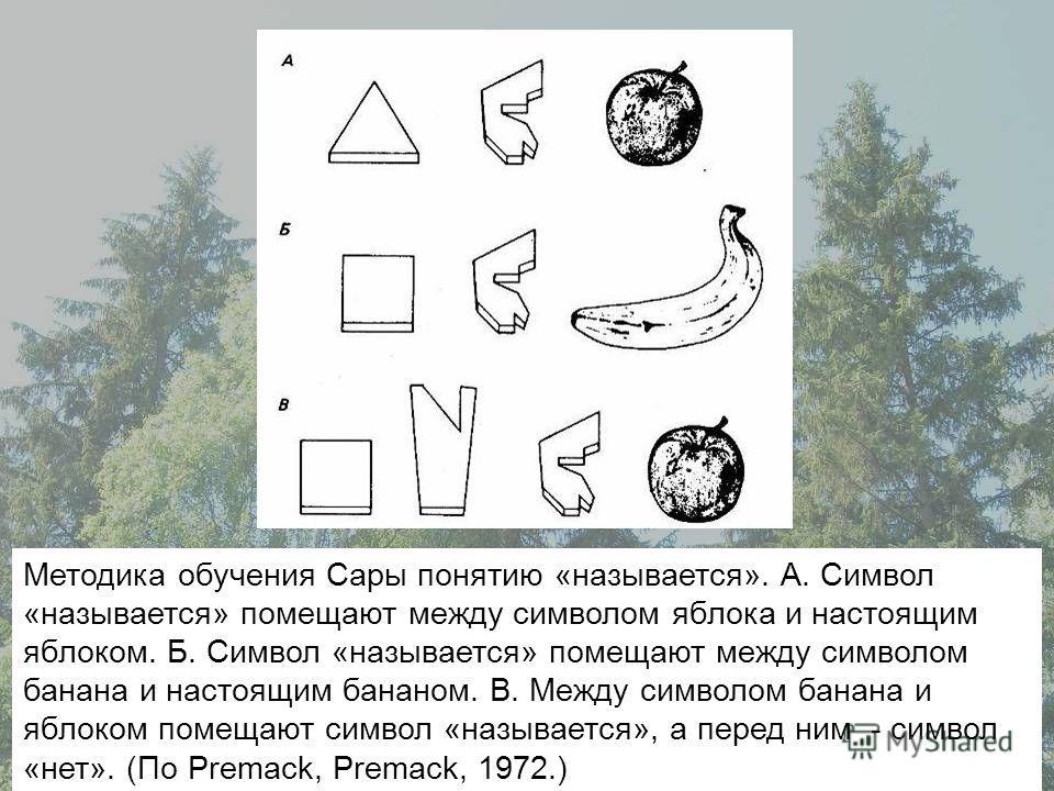 Методика обучения Сары понятию «называется». А. Символ «называется» помещают между символом яблока и настоящим яблоком. Б. Символ «называется» помещают между символом банана и настоящим бананом. В. Между символом банана и яблоком помещают символ «наз