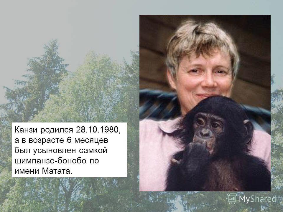 Канзи родился 28.10.1980, а в возрасте 6 месяцев был усыновлен самкой шимпанзе-бонобо по имени Матата.