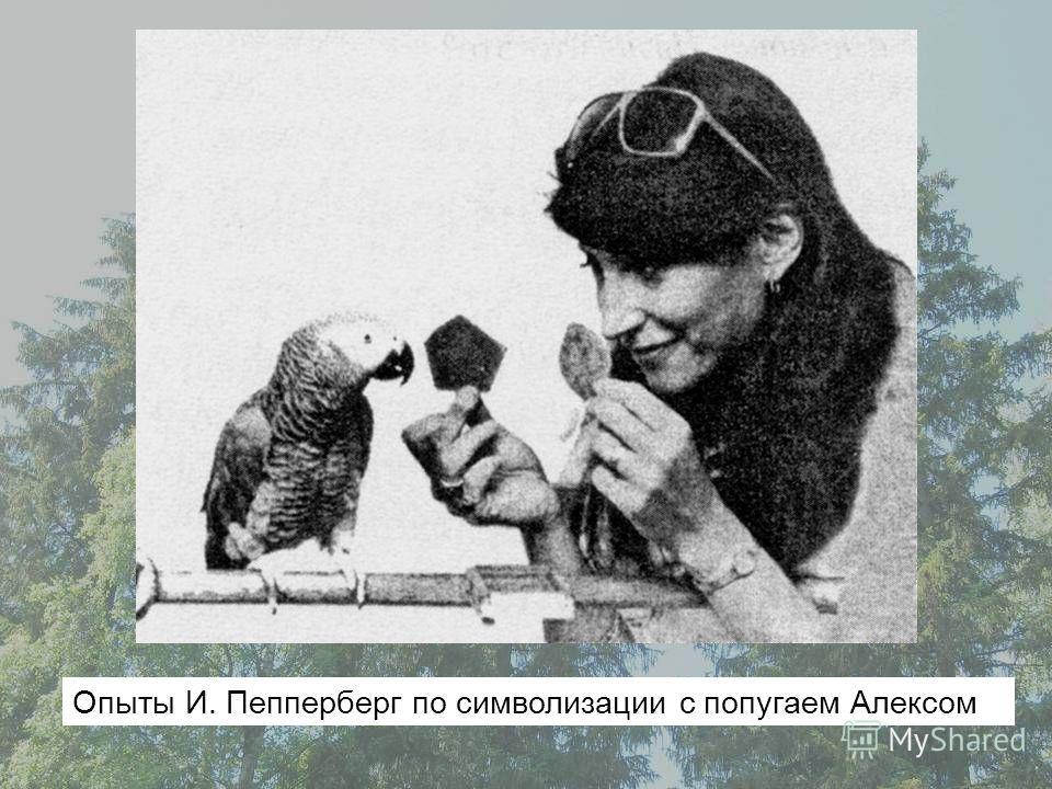 Опыты И. Пепперберг по символизации с попугаем Алексом