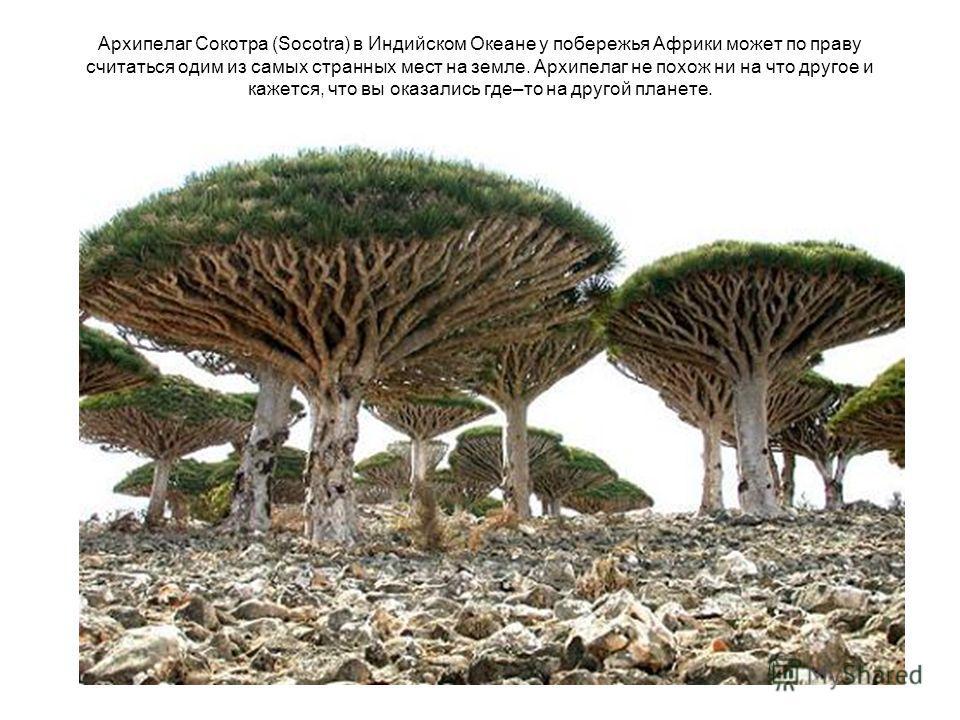 Архипелаг Cокотра (Socotra) в Индийском Океане у побережья Африки может по праву считаться одим из самых странных мест на земле. Архипелаг не похож ни на что другое и кажется, что вы оказались где–то на другой планете.