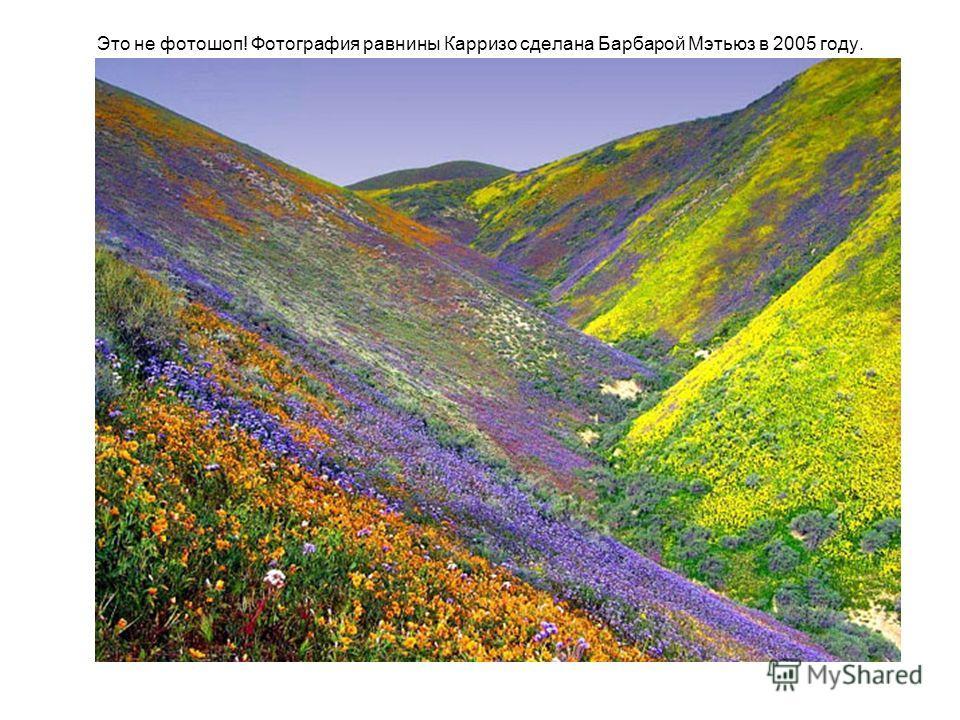 Это не фотошоп! Фотография равнины Карризо сделана Барбарой Мэтьюз в 2005 году.