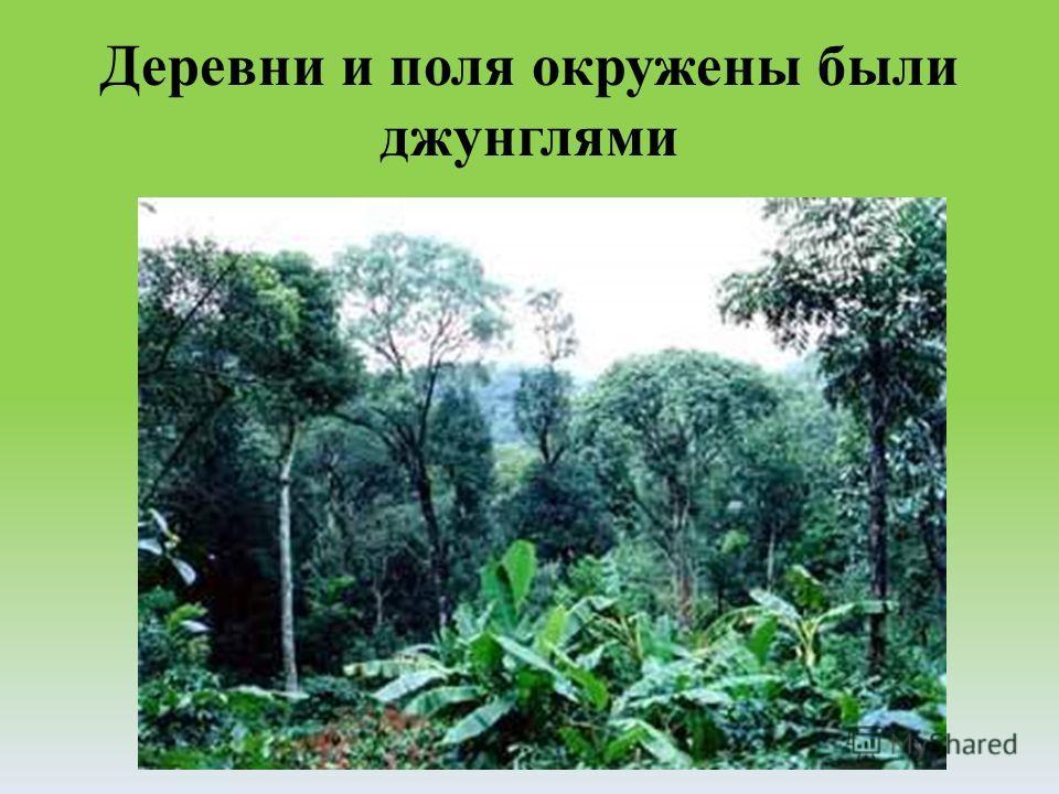 Деревни и поля окружены были джунглями