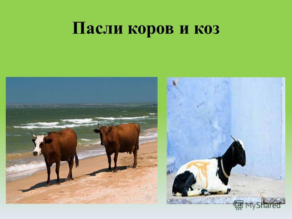 Пасли коров и коз