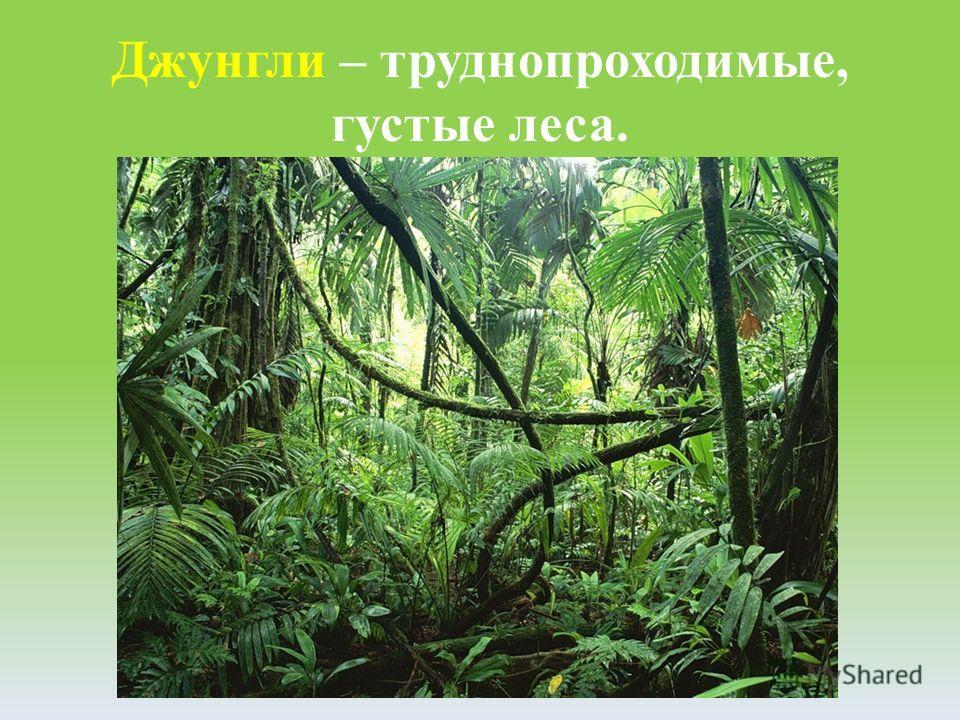 Джунгли – труднопроходимые, густые леса.