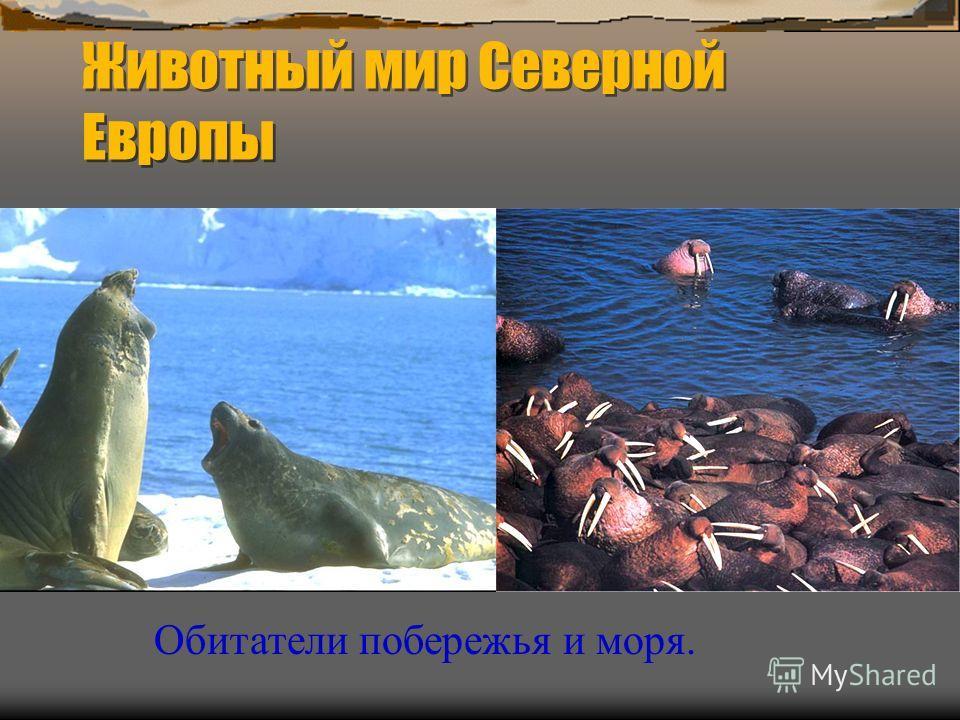 Животный мир Северной Европы Обитатели побережья и моря.