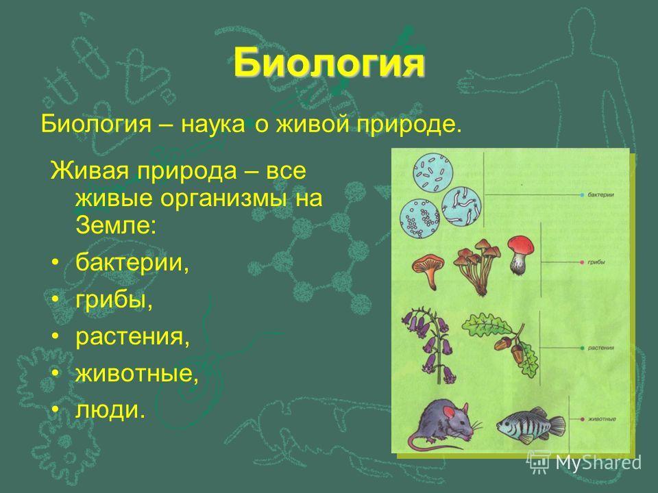 Биология Живая природа – все живые организмы на Земле: бактерии, грибы, растения, животные, люди. Биология – наука о живой природе.