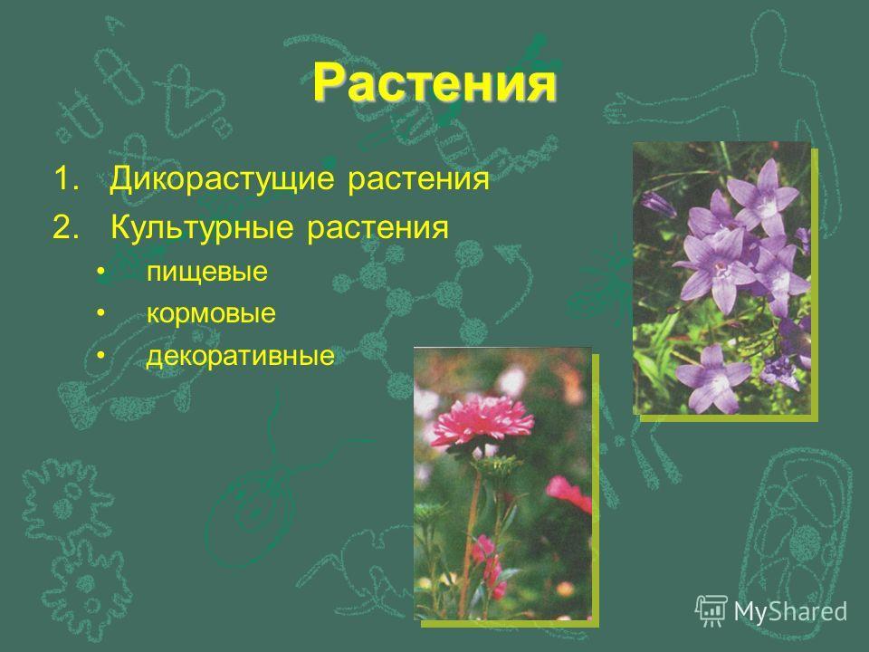 Растения 1.Дикорастущие растения 2.Культурные растения пищевые кормовые декоративные